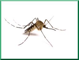 Mosquito Control Waukesha, WI